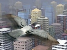 Fly Like a bird 3 online game