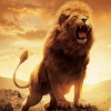 ThePOWEREDLion0961123